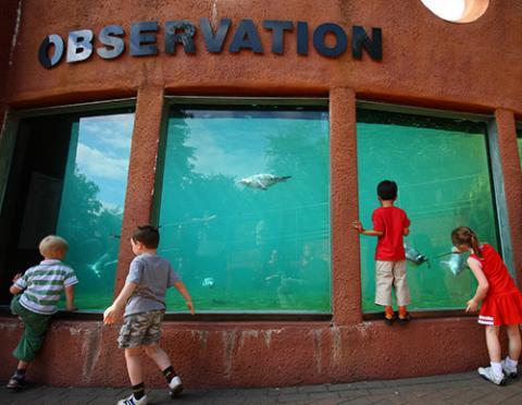 Foto de ninos viendo un acuario de observacion