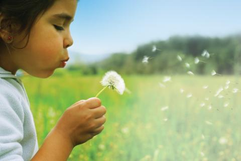 Photo of a young girl blowing a dandelion in a field.